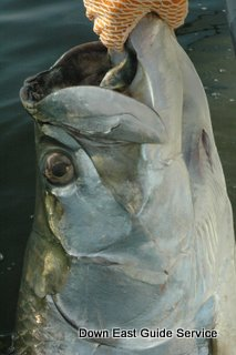 tarpon fishing in North Carolina